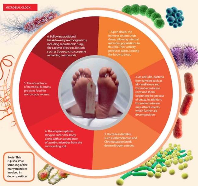 bacteria kateryna Kon