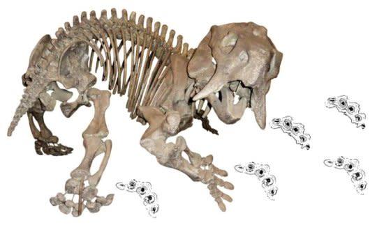 Pentasaurus goggai 180314092330 1 540x360