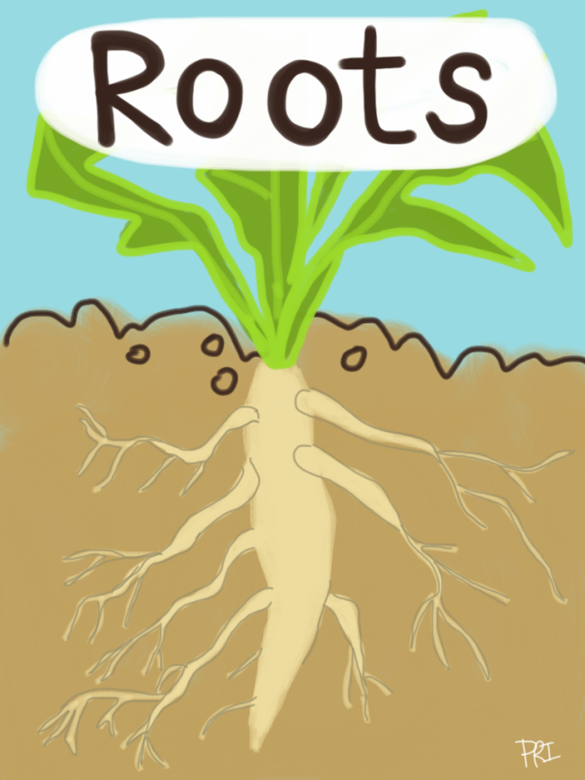Roots-Image.png