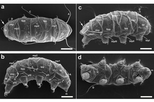 tardigrade-1024x682.jpg