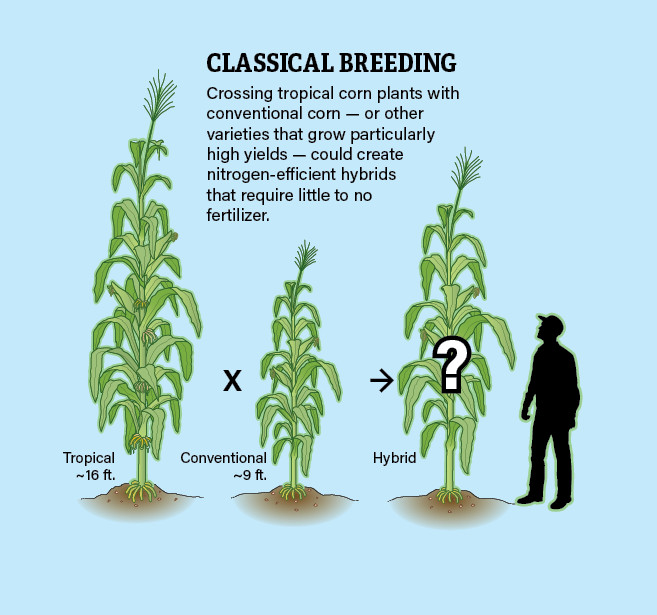 Traditional Plant Breeding Infographic Jay Smith