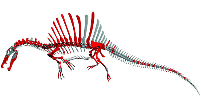 sinosaurus_skeleton.jpg