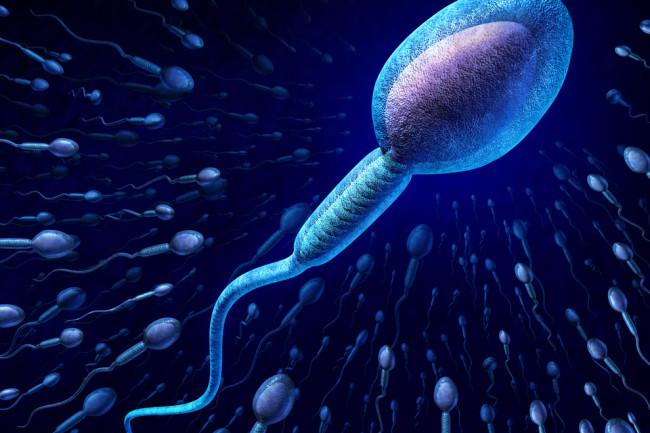 Sperm - Shutterstock