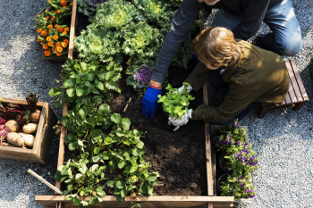 Things to Know Before Spraying Pesticides On Your Garden