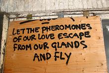 pheromones-graffiti.jpg