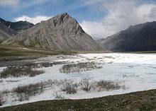 arctic-tundra.jpg