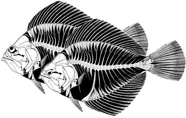 amphistium_drawings-600.jpg