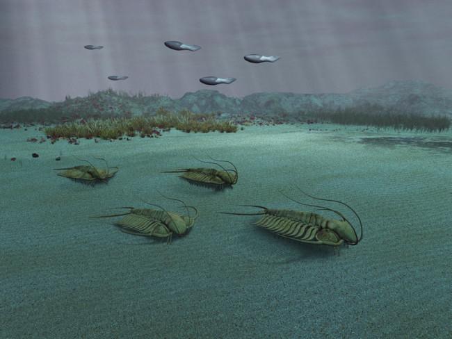 Trilobites - Alamy