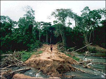 DeforestationinBrazil.jpg