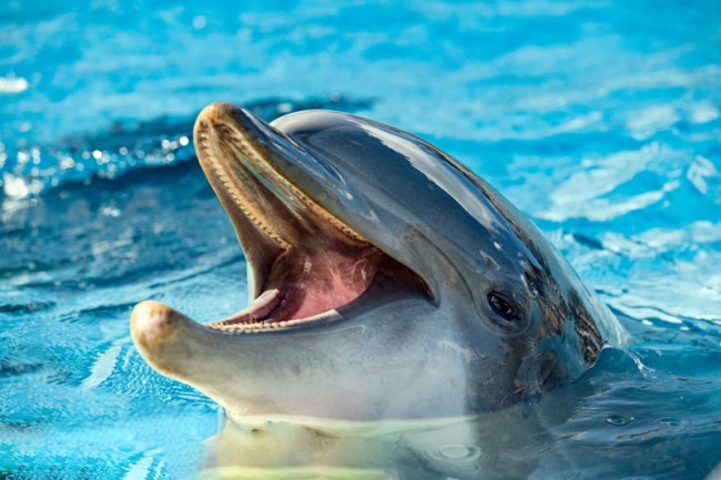dolphin - shutterstock