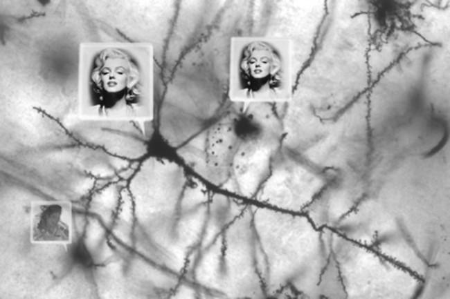 Marilyn-neurons.jpg