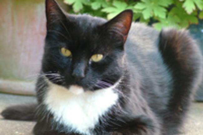 Pepo_the_cat