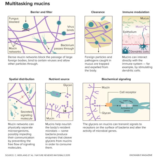 Multitasking Mucus - Knowable