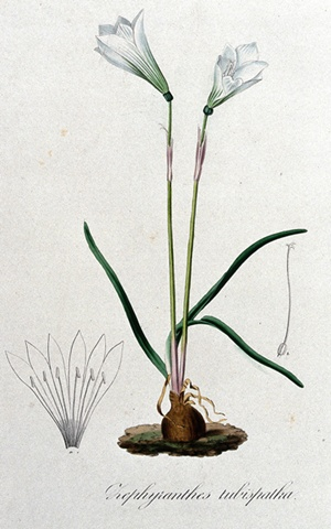 potent-herb