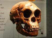 hobbit-skull.jpg