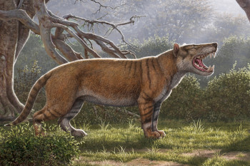 Researchers Find Extinct Mega Carnivore Remains in a Museum Drawer
