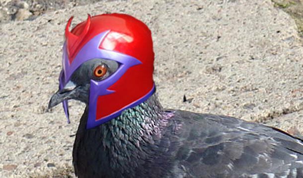 Pigeoneto.jpg