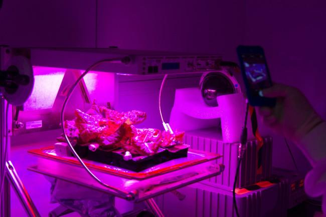 veggie experiment ground control lab