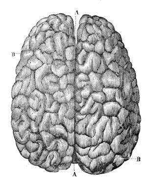 brain-engraving