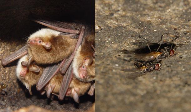 Bat_Flies.jpg