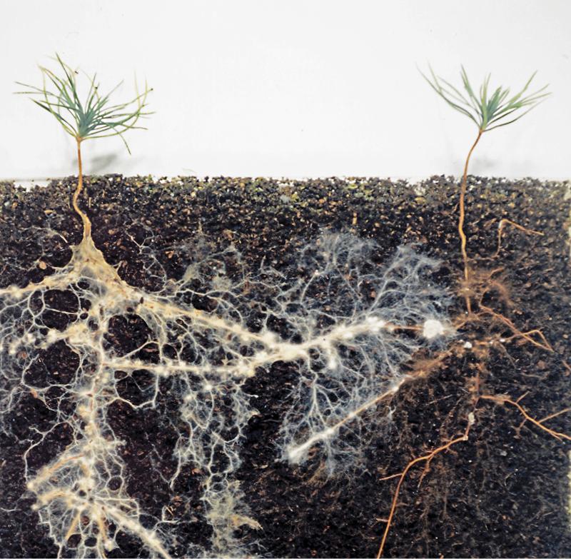 mycorrhizal fungi - David Read - 3 DSC-C0517 02