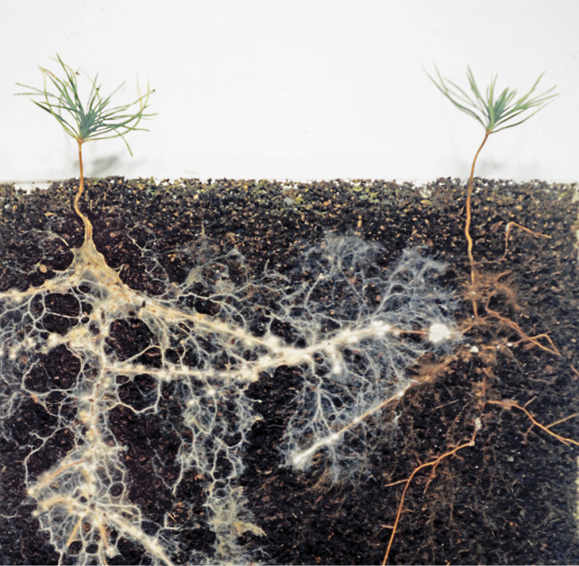 mycorrhizal fungi - David Read - 3 DSC-C0517 02