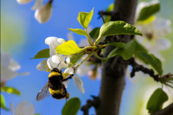 6 Ways You Can Help Save Bees and Other Pollinators