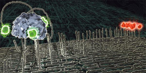 Nanospider.jpg
