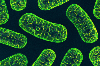 Scientists Devise a Method to Edit Mitochondrial DNA. Here's How It Works and Why It Matters