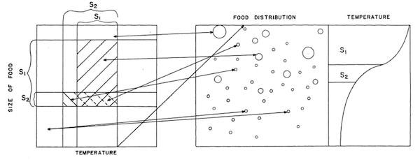 niche-diagram600.jpg