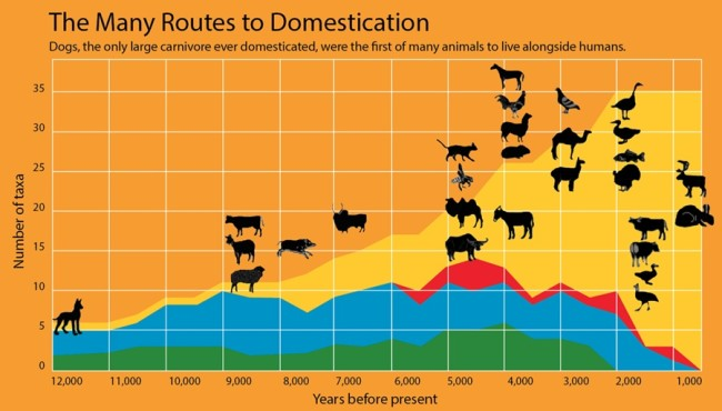 Dog Domestication Over Time Infograph - Larson & Fuller 2014 The Annual Review of Ecology, Evolution and Systematics
