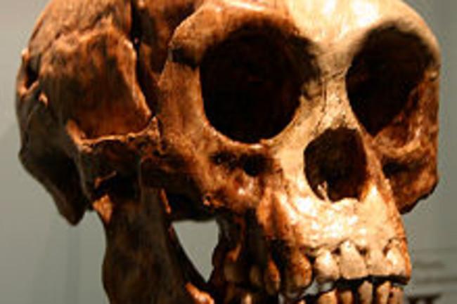 220px-Homo_floresiensis.jpg