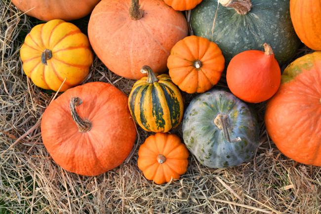 pumpkin varieties - Shutterstock