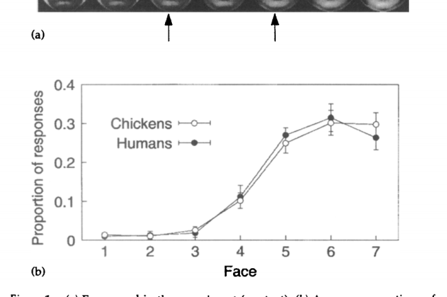 fig-1-chickens.png
