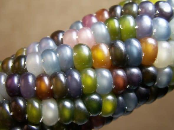 glass-corn-1-e1337100689837.jpg