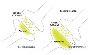 neuronsoncoke