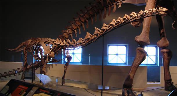 Rapetosaurus.jpg
