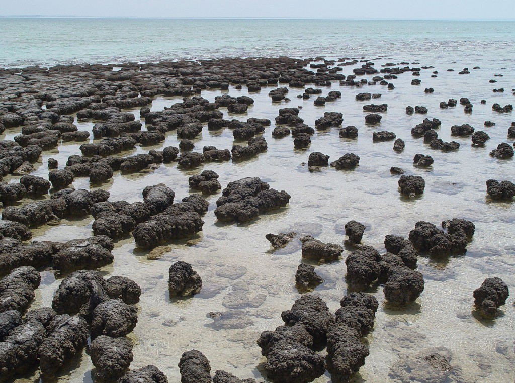 Stromatolites_in_Sharkbay-1024x762.jpg