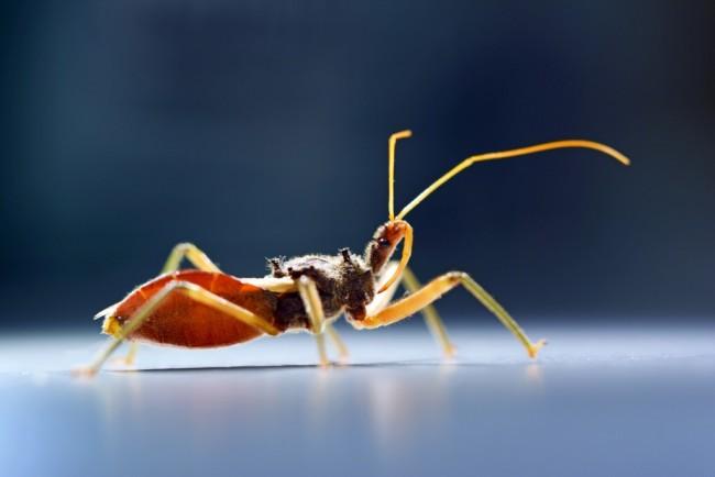assassin-bug-2-1024x683.jpg