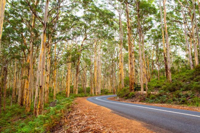 Australian forest - shutterstock 1106802731-1