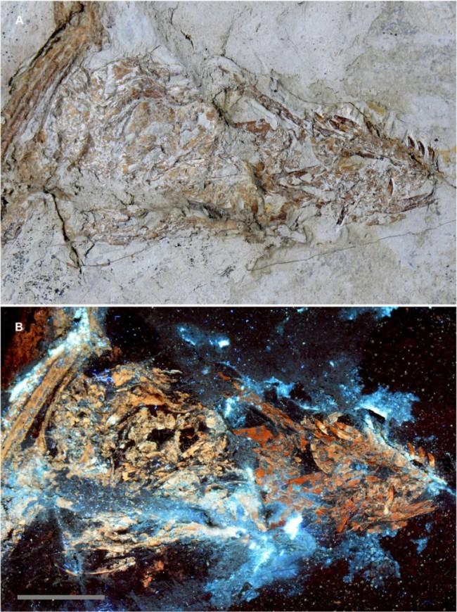 Microraptor-765x1024.jpg