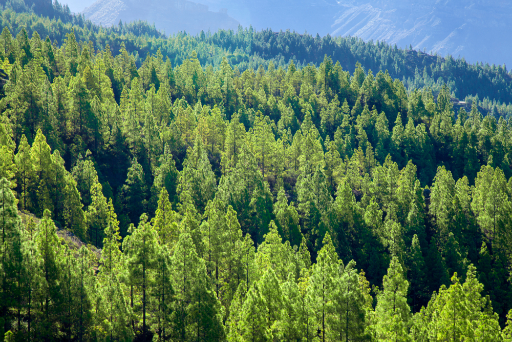 Forest-Aerial-View