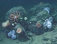 3_octopus_home2.jpg