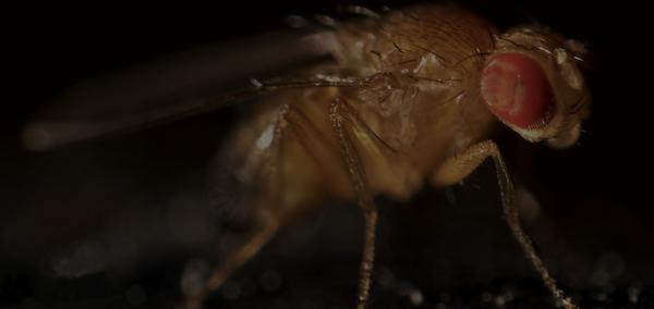 darkfly.png