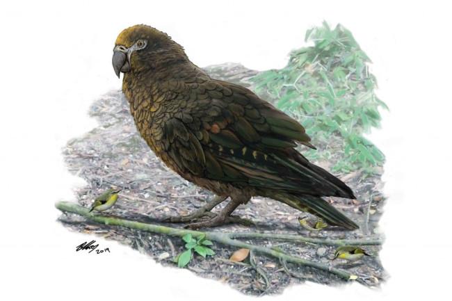 Heracles Giant Parrot - Flinders University
