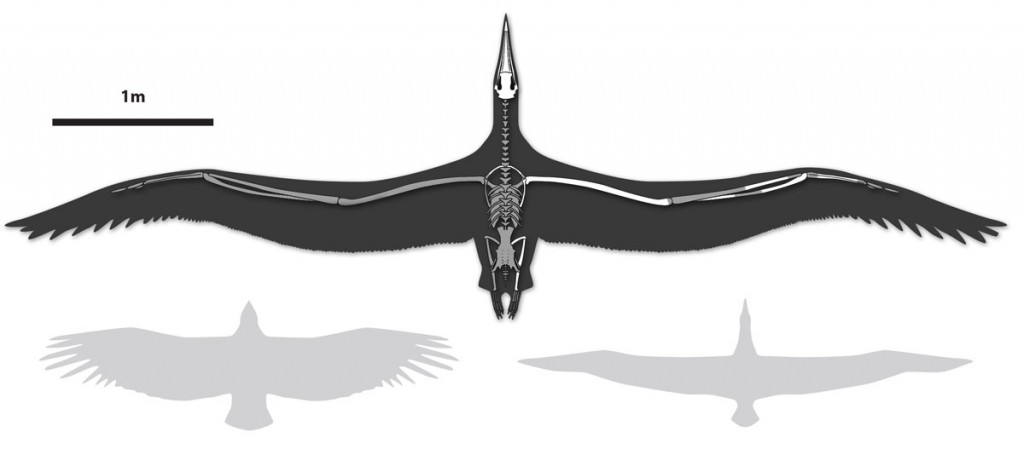 bird-wingspan-1024x455.jpg