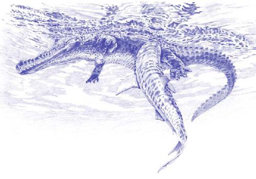 Shark-vs-crocodile.jpg