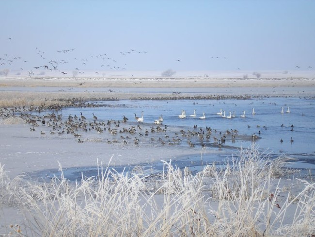 Road salt on wetland communities