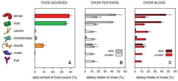 Crow_food.jpg