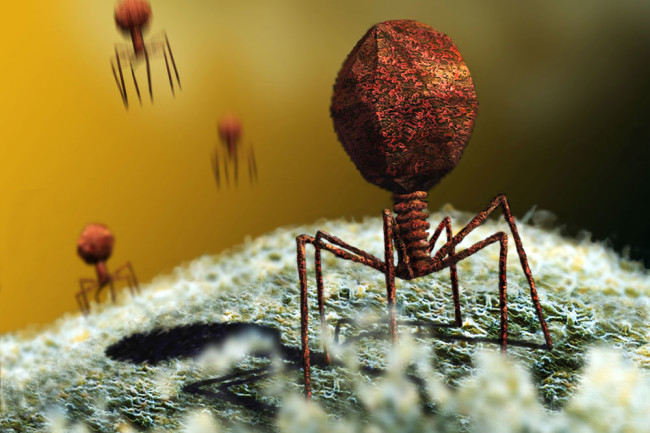 Bacteria-Killing Phages Could Be an Alternative to Antibiotics